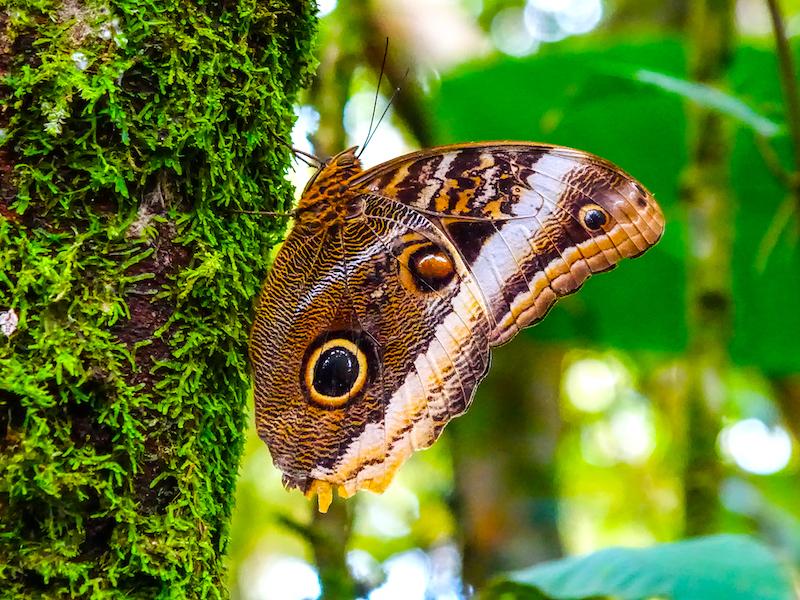 Costa Rica Infos