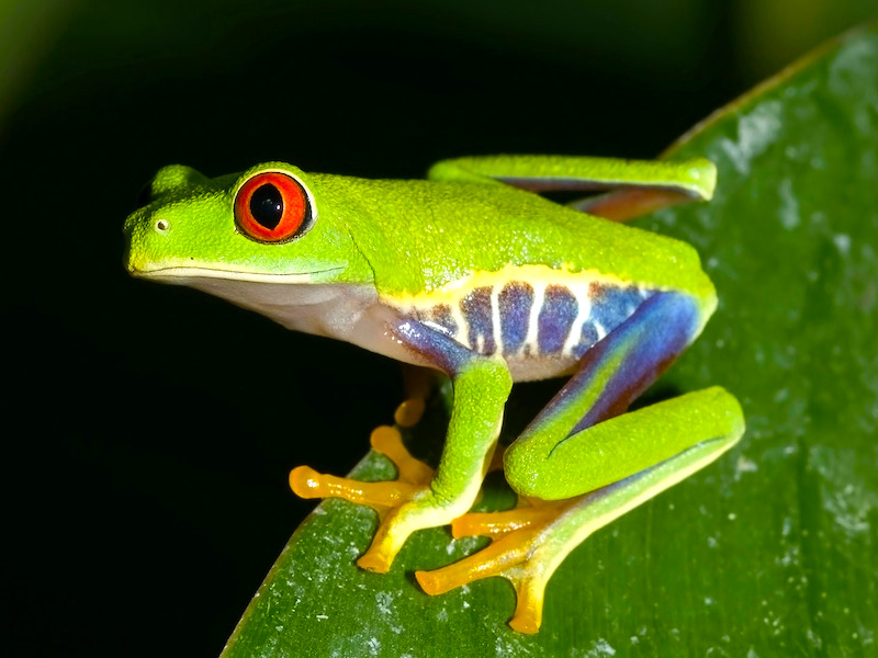 Costa Rica Highlights Rundreise