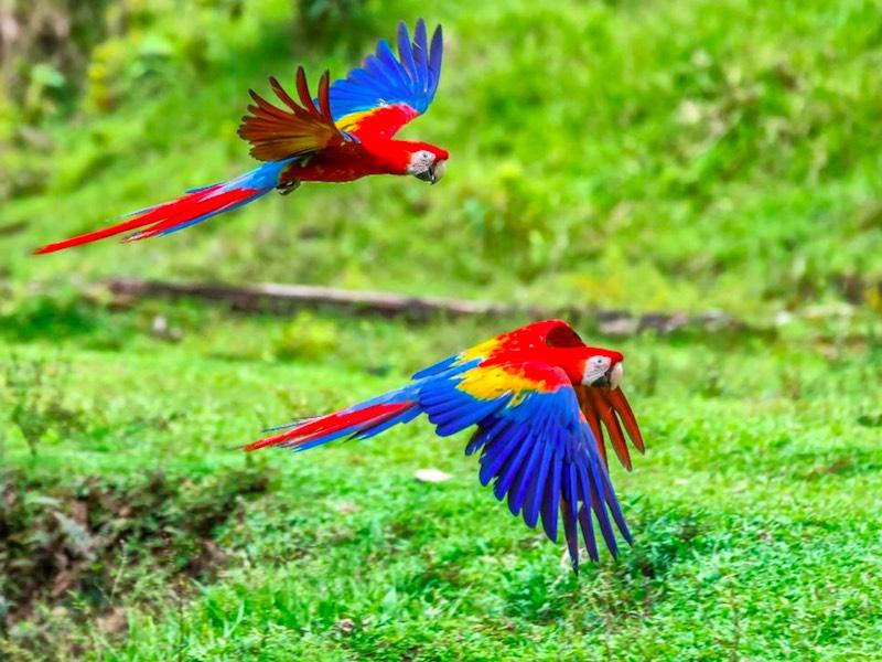 COSTA RICA: NEBELWALD & ROTE ARAS
