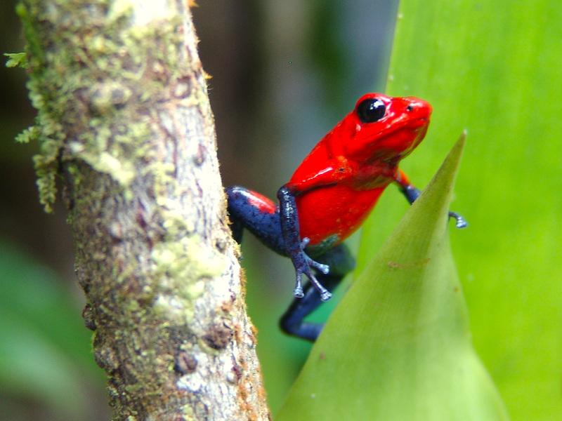 Costa Rica Erlebnisreise