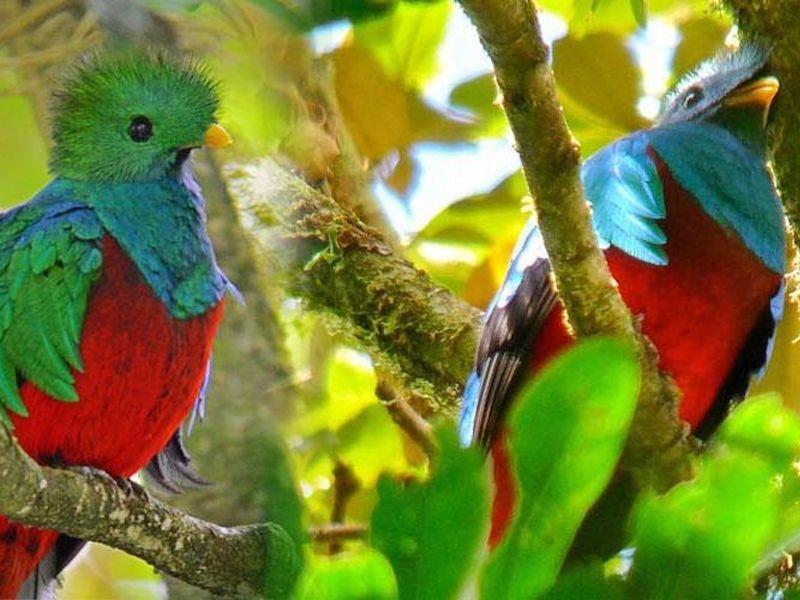 Costa Rica Wildlife Pur