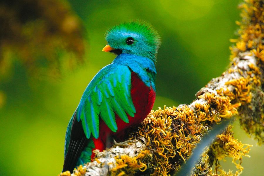Mietwagen Tour Costa Rica Quetzal
